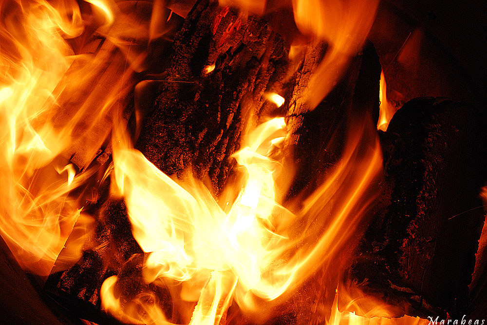 Phoenix in the fire